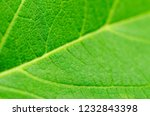 green leaf texture as a... | Shutterstock . vector #1232843398
