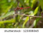 meadowhawk dragonfly | Shutterstock . vector #123308365