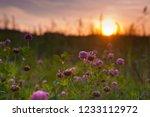 summer landscape. field with... | Shutterstock . vector #1233112972