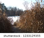 autumn forest  late fall season.... | Shutterstock . vector #1233129355