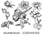 collection of hand drawn... | Shutterstock .eps vector #1233145102