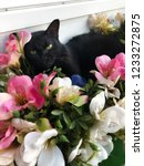 Stock photo portrait of a sleepy black cat with flowers cat lying in the decoration flowers 1233272875