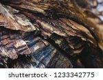 macro of tree wood | Shutterstock . vector #1233342775
