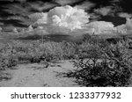 sonora desert in infrared... | Shutterstock . vector #1233377932