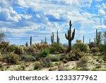the sonora desert in central... | Shutterstock . vector #1233377962