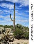 the sonora desert in central... | Shutterstock . vector #1233377965
