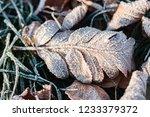 dry fallen autumn leaves... | Shutterstock . vector #1233379372