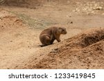 prairie dogs are inhabitants of ... | Shutterstock . vector #1233419845