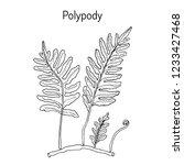 common polypody  polypodium... | Shutterstock .eps vector #1233427468