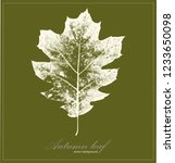 green background with white oak ... | Shutterstock .eps vector #1233650098