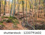 a stream in a beech forest in... | Shutterstock . vector #1233791602