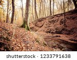a stream in a beech forest in... | Shutterstock . vector #1233791638