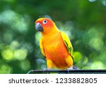 the colorful parrot is relaxing ... | Shutterstock . vector #1233882805