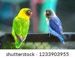 lovebird parrots sitting... | Shutterstock . vector #1233903955