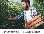 Male Farmer Picking Fresh...