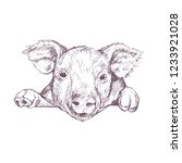pig. sketch. hand drawn vector... | Shutterstock .eps vector #1233921028