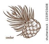 Cedar Tree Branch And Cone ...