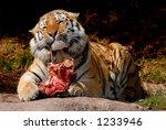 Tiger Lunch At Zurich Zoo