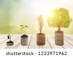 growing money or plant on coins ... | Shutterstock . vector #1233971962