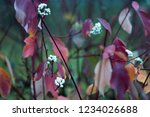 red leaves in the fall on a... | Shutterstock . vector #1234026688