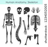 vector illustration set of... | Shutterstock .eps vector #1234052005