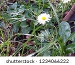 little flower solitary   Shutterstock . vector #1234066222