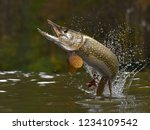 Northern pike fish jumping out of lake or river with splashes 3d render