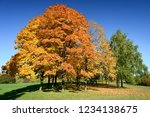 amazing nature and fall concept.... | Shutterstock . vector #1234138675