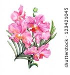 beautiful pencilled pink orchid ... | Shutterstock . vector #123421045