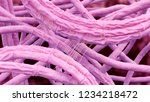 bacillus anthracis  anthrax  3d ... | Shutterstock . vector #1234218472