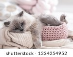 Stock photo cute cat with knitted blanket in basket at home warm and cozy winter 1234254952