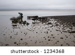 Farmer collecting oysters from beds near Holy Island (Lindisfarne) in Northumbria, England.
