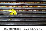 dry yellow leaf between the... | Shutterstock . vector #1234377142