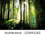 shafts of sunlight in a drak... | Shutterstock . vector #123441262
