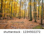 beech forest in autumn | Shutterstock . vector #1234502272