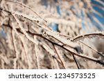 trees covered with rime... | Shutterstock . vector #1234573525