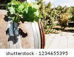 wine barrel with fresh leaves... | Shutterstock . vector #1234655395