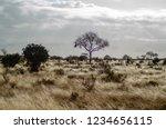 solitary tree landscape in...   Shutterstock . vector #1234656115