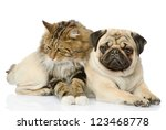 Stock photo the dog and cat lie together isolated on white background 123468778
