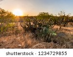 Landscape Of The Caatinga In...