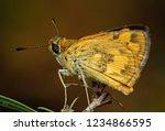 macro photography of yellow...   Shutterstock . vector #1234866595