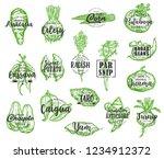 organic food  vector vegetables ...   Shutterstock .eps vector #1234912372