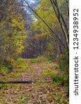 a pathway in webbs wood in... | Shutterstock . vector #1234938952