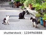 Black Cat On The Street Lookin...