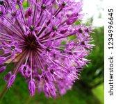 pretty violet flower