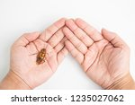 focus body cockroach on human... | Shutterstock . vector #1235027062