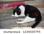Stock photo the little black and white cat sleeping on the pavement outside the city 1235035795
