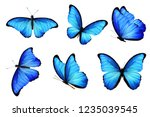 Blue Butterflies Isolated On...