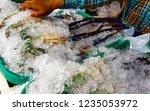 fresh blue shrimp on ice in the ... | Shutterstock . vector #1235053972