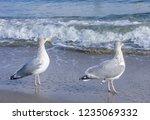 Screaming Seagull Sea